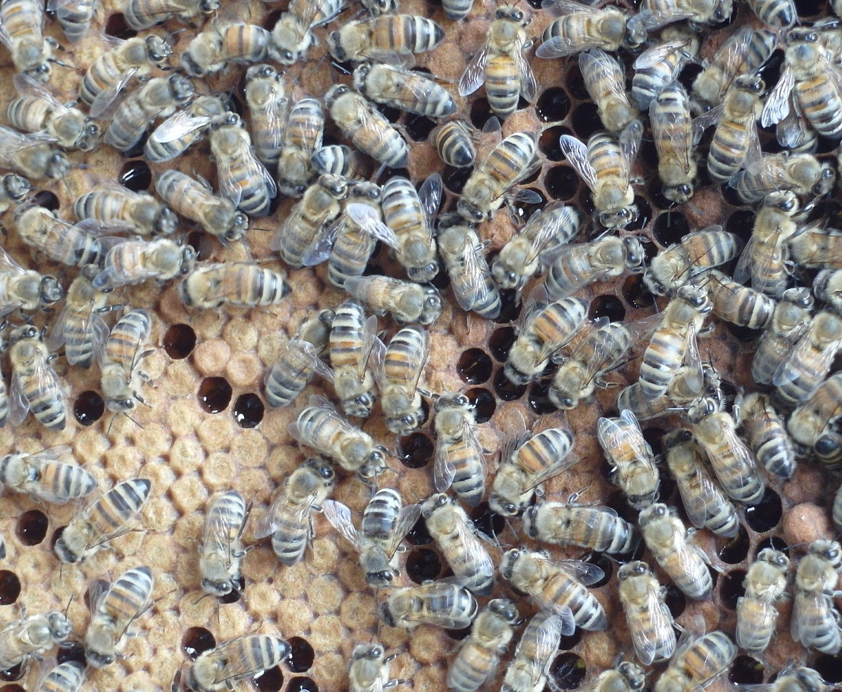 Besuch am Bienenstand